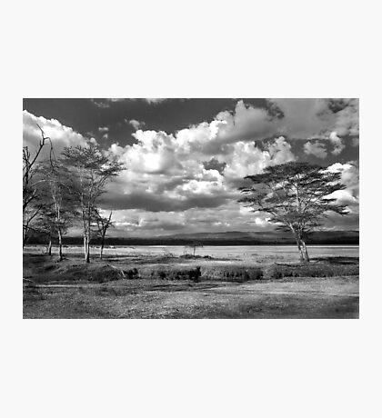 The plains where the zebra and buffalo roam Photographic Print