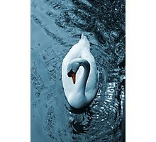 Swan II Photographic Print