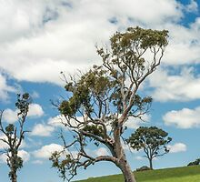 Lone tree by Candice O'Neill