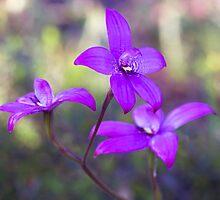 Intermediate Blue Enamel orchid by dgugeri