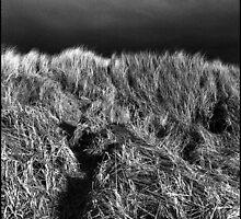 Oregon Coast  by TaraT
