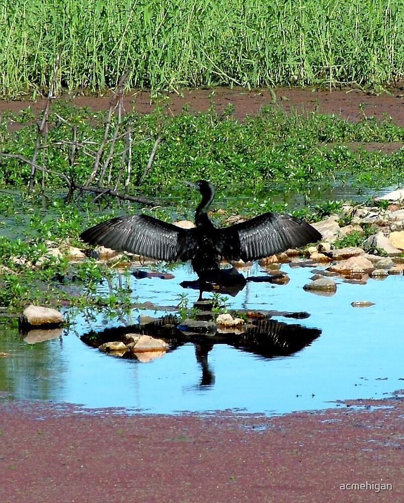 bird reflection by acmehigan