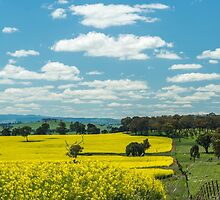 Canola Glory by Candice84
