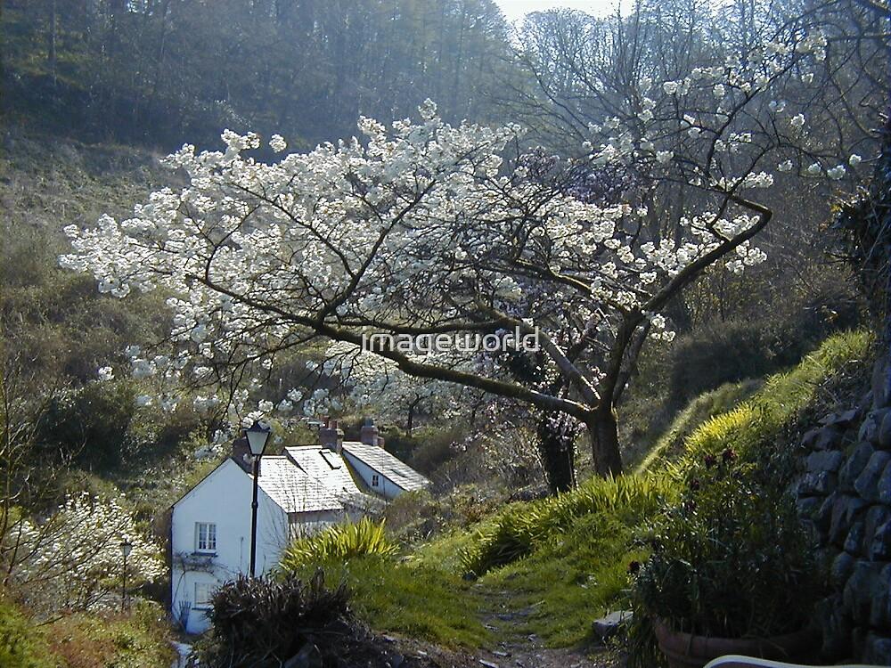 spring morning by imageworld