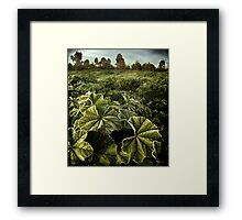 bitter green Framed Print