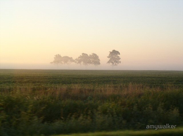 Field of fog by amywalker