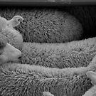 counting sleeping sheep by Gus Buckner
