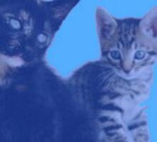 BLUE KITTENS Sticker