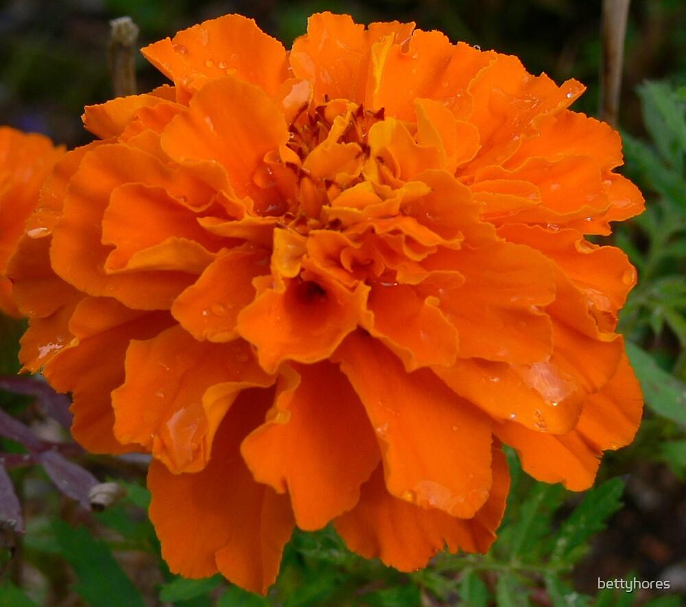 Orange flower by bettyhores