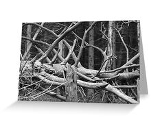 Dead wood lives  Greeting Card