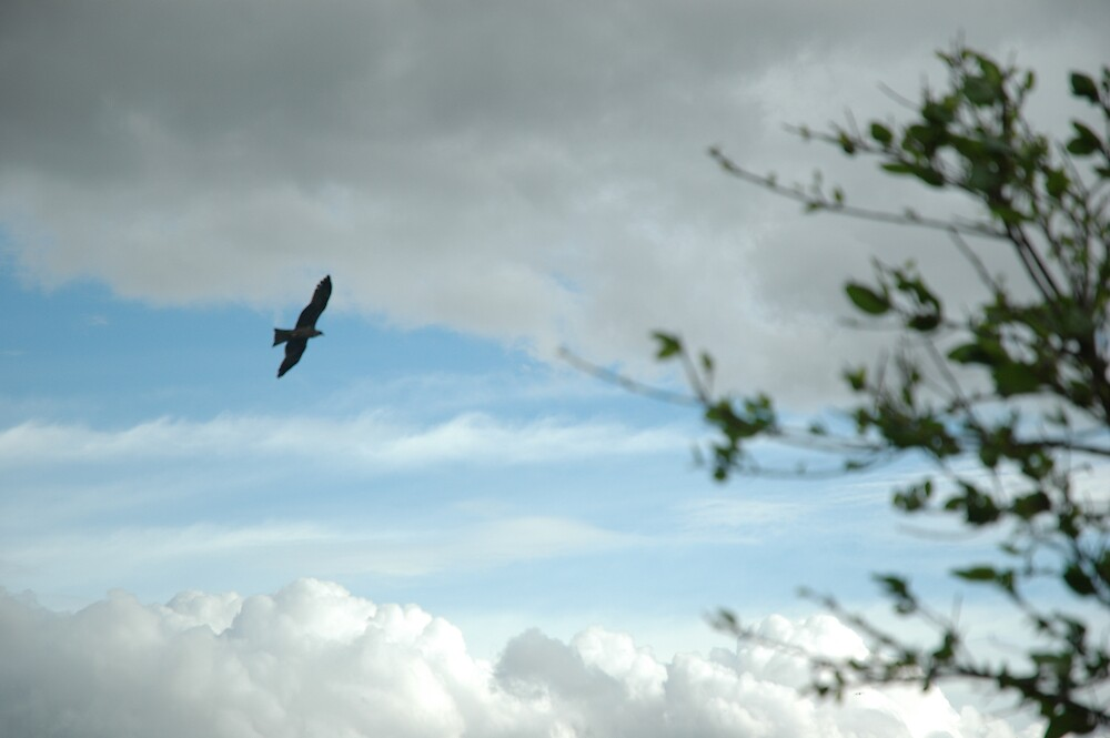 fly high by kathie