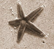 Starfish by Crystal Darby