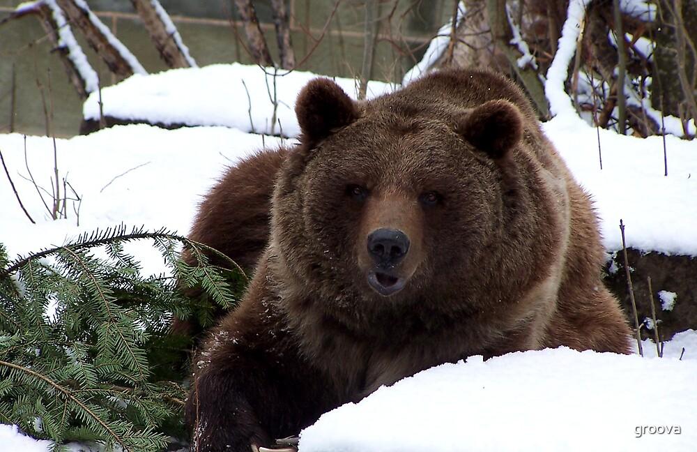 the Bears of Bern by groova