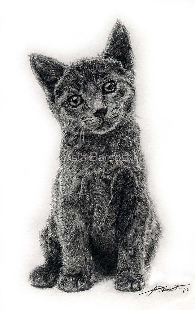 Curious Kitten by Asia Barsoski