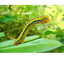 Curious caterpillar Photographic Print