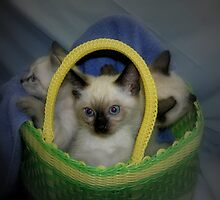 Basket of Cute by Jen Marsh