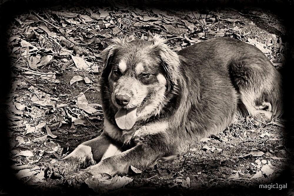 Dark Dog by magic1gal
