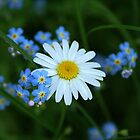 """""""Forget Me Not"""" by sheldoni"""