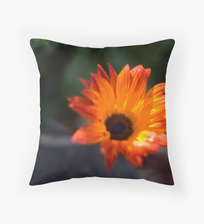 STH AFRICAN DAISIES I Throw Pillow
