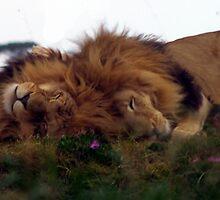 Sleeping Kings by Andrew Wilson