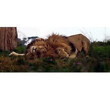 Sleeping Kings Photographic Print