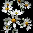 Daisy Chain by Leeo