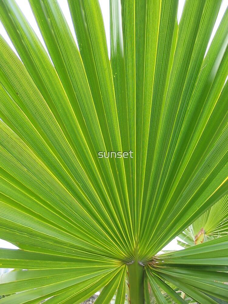 hawkesbury river palm by Sam Van