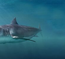 Great White Shark  by hannah07