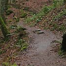 Up the woodland path by KMorral