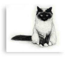 Birman Canvas Print