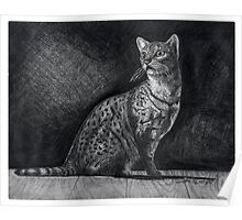 Alert Bengal Cat Poster