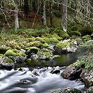 13.11.2014: Small River I by Petri Volanen