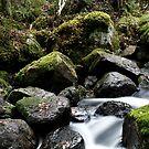 13.11.2014: Small River II by Petri Volanen