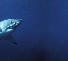 Shark effect by hannah07