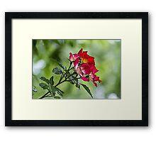 flower in spring Framed Print