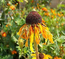Dead Sunflower by Magdalena Chapkunoska