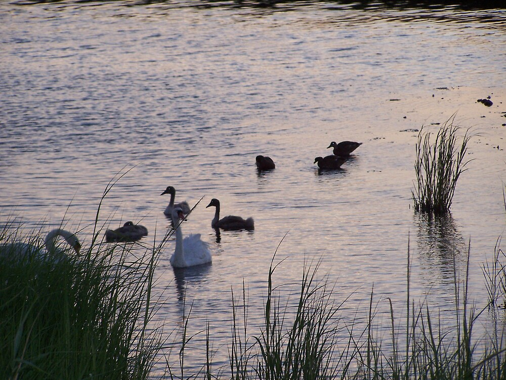Swan by missliz