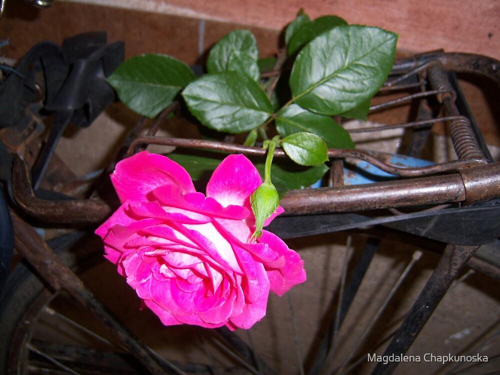 Trapped Rose by Magdalena Chapkunoska