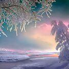 Pink Reflection by Igor Zenin