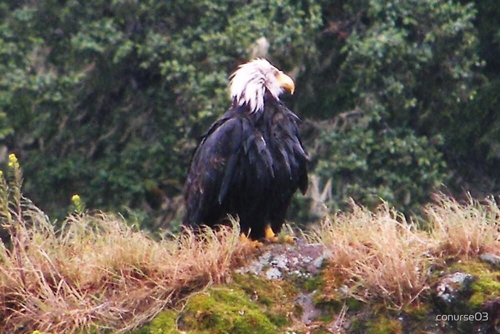 Wet Eagle by conurse03