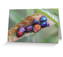 Friends in the garden - jewel bugs Greeting Card