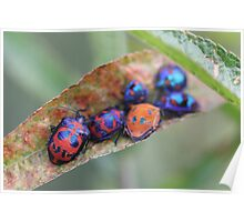 Friends in the garden - jewel bugs Poster