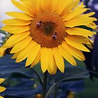 Sunflower and 2 bees by Clare McClelland