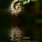 Fiddlehead Fern at Pond by AngelHoney