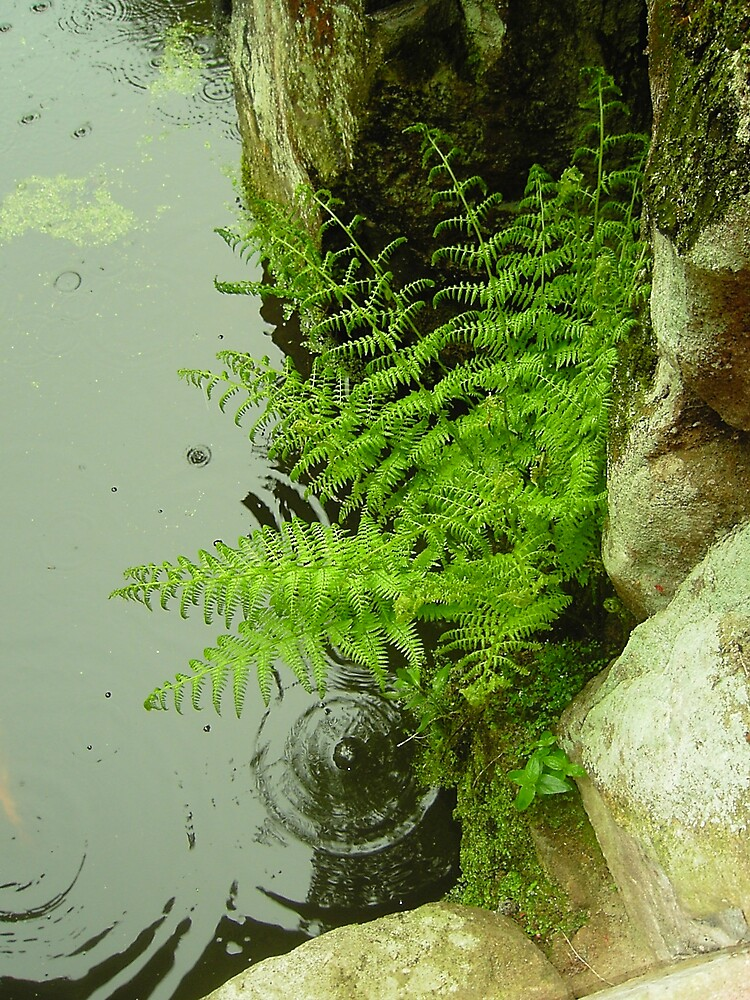 Raindrop Fern by Arabrab