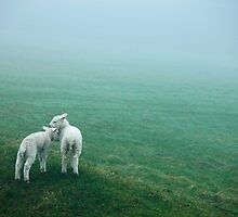 Lost Lambs by Andrew Bret Wallis