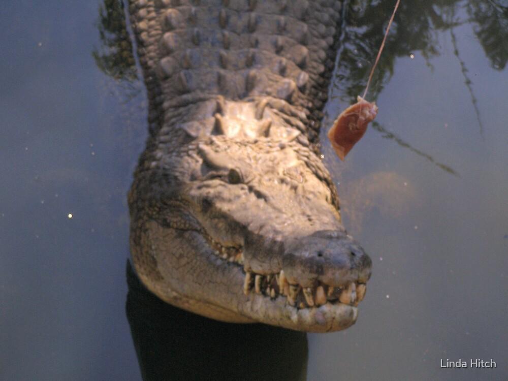 croc feeding by Linda Hitch