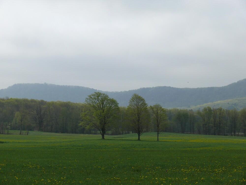 beautiful field by Nina Andrews