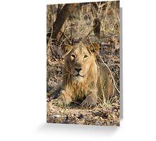 Gir Lion Greeting Card