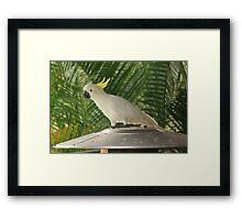 Visitor Framed Print